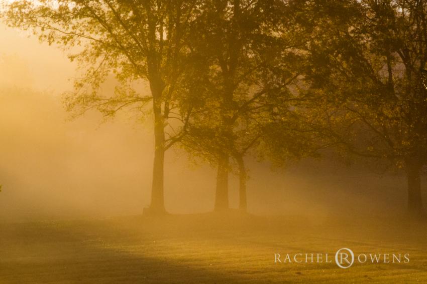 rachel owens photography
