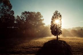 sunburst-tree